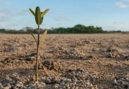 Незаконно использованные земли были возвращены в районные земельные  запасы